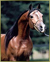 Click here to see our premier stallion, Scandalous Legacy